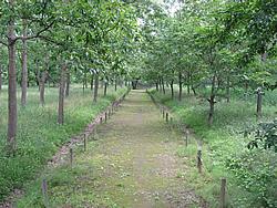 自然観察ゾーン01