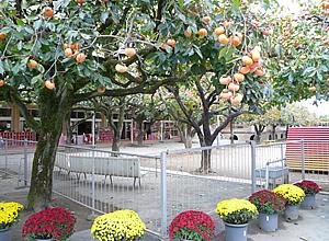 大宝保育園2