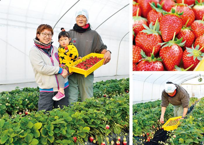 イチゴ農家 齊藤さんご家族