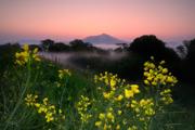 菜の花香る丘