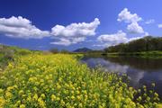 春の小貝川