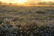朝陽に咲く
