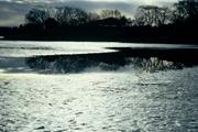 採寒の砂沼