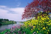 春の花ごよみ