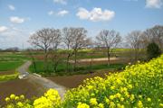 陽々春の詩