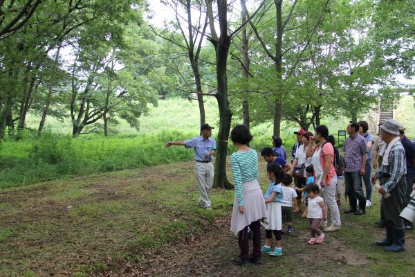 H30.6.24オオムラサキ観察会‗自然散策路